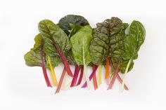 Although swiss chard isn't the first leafy green you think of when cooking up a new recipe, or rummaging around your kitchen thinking of what to make for dinner, you should definitely introduce it into your diet.