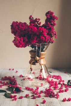bright magenta flowers arrangement in a chemex Fall Flowers, My Flower, Flower Power, Beautiful Flowers, Prettiest Flowers, Purple Flowers, Beautiful Pictures, Bouquets, Belle Plante