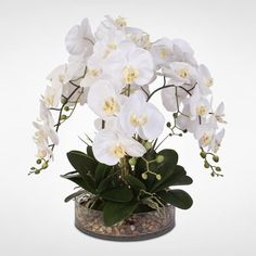Shop White Real Touch Phalaenopsis Orchid & Vanilla Grass in a Glass Bowl - On Sale - Overstock - 18024411 Orchid Pot, Moth Orchid, Phalaenopsis Orchid, Orchid Care, Silk Orchids, White Orchids, Arreglos Ikebana, Orchid Flower Arrangements, Artificial Orchids