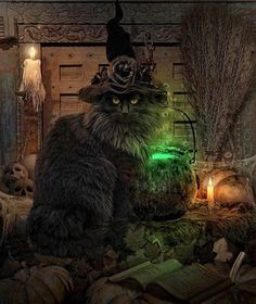 Black Cat... Ready for Halloween ~ Love him, looks like Lamonte :)