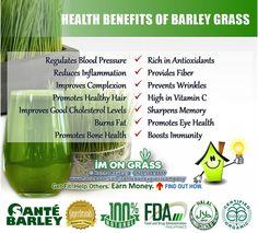 Health benefits of barley grass Barley Health Benefits, Barley Nutrition, Cheese Nutrition, Vegetable Nutrition, Kids Nutrition, Diet And Nutrition, Raw Food List, Raw Food Diet Plan, Health