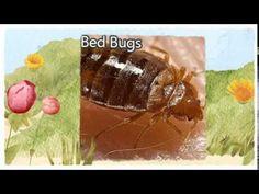 Visit: http://pestcontrolpinole.com/ Pest Control 510-545-4044 Pinole CA 94564