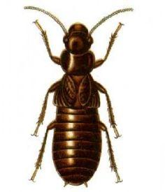 How to prepare for Termite Swarm Season
