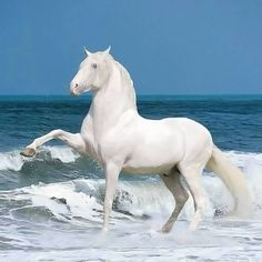 Horses Free Spirit