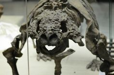 #Travel #tour #Darwin Museum (177)