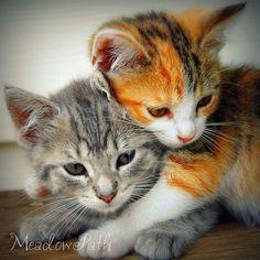 Kindergarten drucken Kätzchen Katzen Tierbabys von MeadowPath