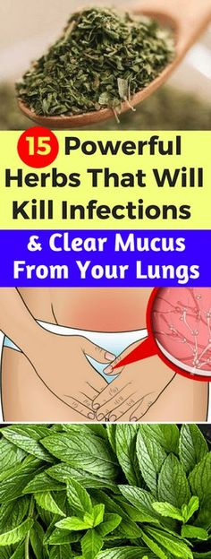 15 Powerful Herbs That Will Kill Infections and Clear Mucus From Your Lungs – Today Health People