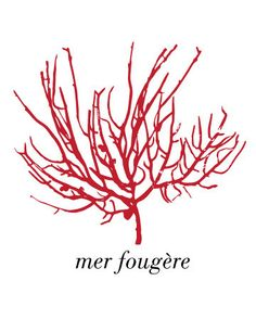 Mer Fougere Sea Fern Card by WallpaperGirlCabinet on Etsy, $4.00