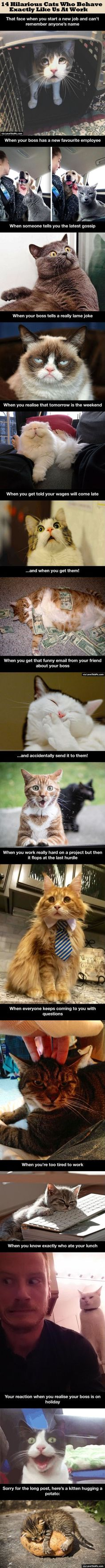 14 Hilarious Cats Who Behave Exactly Like Us At Work cute animals cat cats adorable animal kittens pets kitten funny pictures funny animals funny cats
