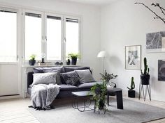 ¿No sabes cómo dar alegría a tu casa? Las plantas son la repuesta a tus dudas decorativas.