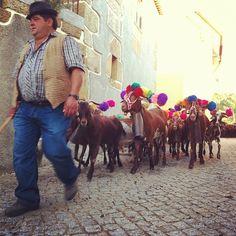 Blessing of the sheep and goat herds in Folgosa da Madalena, Portugal são joão das ovelhas by Rosa Pomar