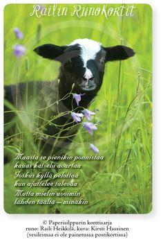 Iki-ihana pikkukaritsa kurkistelee suureen maailmaan. Kesälaitumet houkuttelevat, mutta hiukan pelottaakin. Mitä tehdä? Railin runo sanoittaa lähtemisen ja itsensä voittamisen haastetta ja riemua. Anna ja lähetä Railin Runokortti rohkaisuksi ja voimaksi! Railin Runokortti -sarjan postikortti, jonka kuvassa kesälaitumelle syntynyt kainuunharmaskaritsa Kolin Kortelahdessa. Avainlippu-tuote. Runo: Raili Heikkilä, kuva: Kirsti Hassinen. Railin Runokortit - postikortit pyörein kulmin vuodesta… Goats, Cow, Animals, Animales, Animaux, Cattle, Animal, Animais, Goat