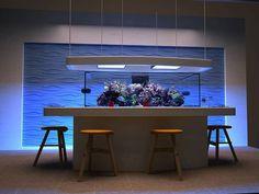 Coral Reef Aquarium, Saltwater Aquarium Fish, Aquarium Setup, Glass Aquarium, Tropical Aquarium, Aquarium Design, Saltwater Tank, Marine Aquarium, Fish Aquariums