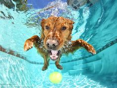 Underwater dogs steal your heart to find a home