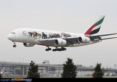 New special 'United For Wildlife' scheme arriving from Dubai Commercial Plane, Commercial Aircraft, Fly Go, Different Airlines, Cargo Aircraft, Emirates Airline, Aircraft Painting, Airbus A380, Aircraft Pictures