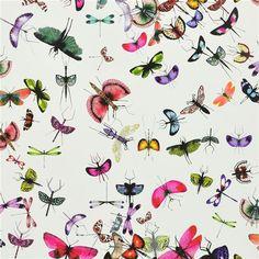 mariposa - perroquet wallpaper