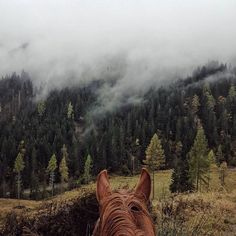 View through The Horse's Ears. No view better than on the back of your horse.