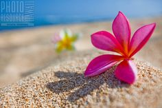 Plumerias on the beach