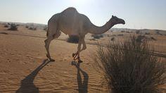 Best #Morning Desert Safari Tour Packages