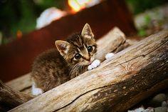 Itty bitty kitty ❤️