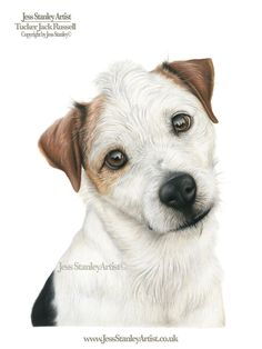 Tucker the jack russell by Jess Stanley Artist. Pet portrait in faber castell polychromos and caran dache luminance Perros Jack Russell, Jack Russell Puppies, Jack Russell Terrier, Dog Portraits, Portrait Paintings, Caran D'ache, Colored Pencil Techniques, Color Pencil Art, Pencil Illustration