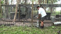 Easy Poor Man's Dog or Fox Proof Fencing for Chicken Pen   Mark Valencia {video}