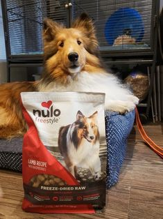 Use Nulo Freeze-Dried Raw as a topper on kibble or a full meal for your little athlete. Our Lamb recipe with Raspberries recipe contains 80% Lamb, organs & bone and functional ingredients like broccoli, dried egg yolks and kale for superior nutrition. Your best friends won't be able to resist mealtime when they get their first taste of this Nulo Freeze-Dried Raw recipe. Lamb Recipes, Raw Food Recipes, Grain Free Dog Food, Raspberry Recipes, Egg Yolks, Freeze Drying, Kale, Broccoli, Grains