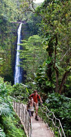 Hike to Akaka Falls on the Big Island of Hawaii Adventure , fun , wildlife ,safari, if these u look for then mail us Sales Hawaii Vacation, Hawaii Travel, Travel Usa, Hawaii Honeymoon, Vacation Destinations, Dream Vacations, Vacation Spots, Kona Hawaii, Hawaii Life