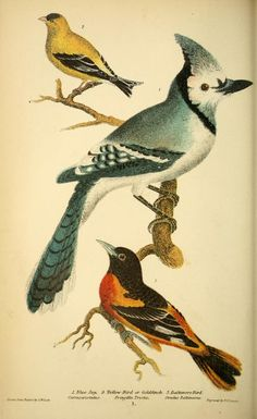 American Ornithology: The natural history of the birds of the United States, Alexander Wilson, Vol I, 1876.
