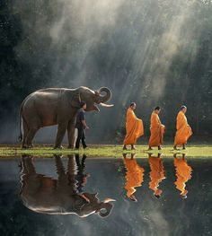 This Laos tour includes exploring the mysterious Plain of Jars, discovering Luang Prabang historic Buddhist town, and visiting Vientiane capital city. Image Elephant, Amazing Photography, Art Photography, Thailand Elephants, Wild Elephant, Art Asiatique, Cute Animal Photos, Nature Images, Belle Photo