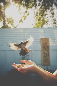 She held her hands out waiting for the bird she called Free to fly over to her