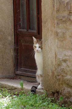 Sneaky cat by Arayashikinoshaka.deviantart.com on @deviantART