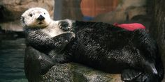 Draw Me Like One of Your French Sea Otters