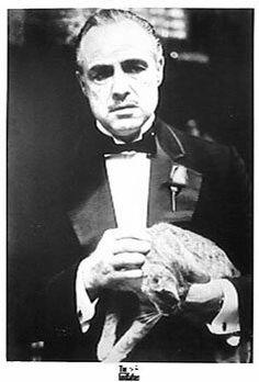 godfather-cat.