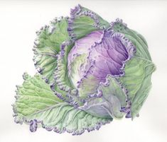 Janene Walkky is an Oregon based botanical artist specializing in graphite & watercolor renderings of native plants of the Pacific Northwest. Art And Illustration, Vegetable Illustration, Illustrations, Watercolor Fruit, Watercolor Paintings, Art Paintings, Botanical Drawings, Botanical Prints, Vegetable Painting
