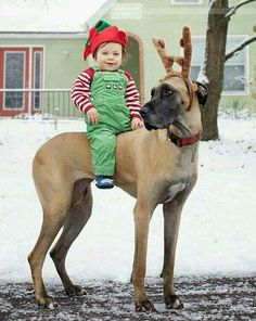 Great dane and elf