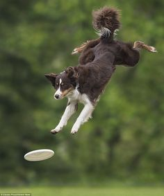 The dogs were taking part in the freestyle and distance sections of the Disc Dog Race competition in Italy