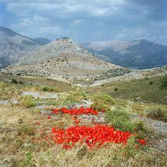 Sparta, Greece by Katina Houvouras