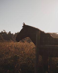 Cavalo Fotogénico (1) . . . . . #portugaldenorteasul #portugal_de_sonho #igersportugal #wu_portugal #p3top #super_portugal #portugalcomefeitos #topportugalphoto #ig_today #gerador #streetphotography #sunset  #visual_square #shooters_pt #landscape #vscofilm #huntgramportugal #topportugalphoto #minimal #gameoftones #minimallandscape #horse #animal  #sonya6000 #sonyphotography #igersportugal #vscopt #igmaster #bomregisto #15aoburro