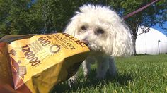 Warning to pet parents about snack bags around pets - the outcome could be fatal! Read more!
