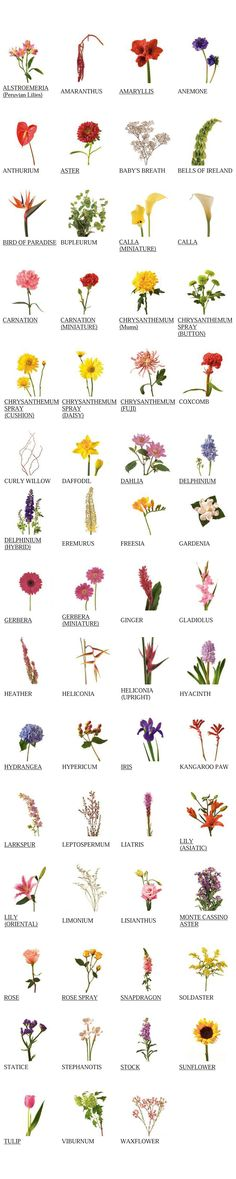 //flower glossary #floral #arrangement