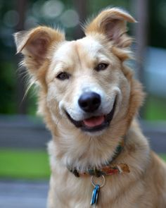 Smiling Dog - Yahoo Image Search Results