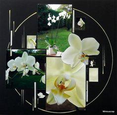 orchid_e2