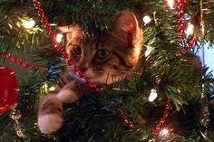 christmas cats - Cerca con Google
