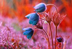 121clicks.comDreamy and Surreal Nature Photography By Magdalena Wasiczek - 121Clicks.com