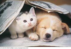 Newspaper Kitten and Puppy