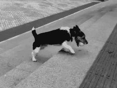 I want this dog… watch the video Non vuoi giocare con me? Che m'importa, io mi diverto tantissimo da solo! (via zeta3's soups)
