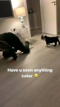 Super Cute Puppies, Cute Baby Dogs, Cute Funny Dogs, Cute Dogs And Puppies, Bulldog Puppies, Cute Funny Animals, Cute Babies, Doggies, Baby Animals Pictures