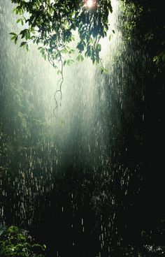 waterfall through trees