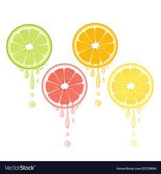 Citrus drops juicy lemon grapefruit lime orange vector image on VectorStock